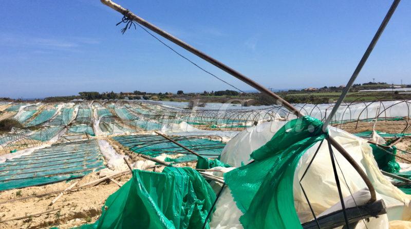 """Pachino, agricoltori in crisi: """"Rovinati da prezzi e maltempo"""""""